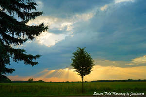 Sunset field harmony