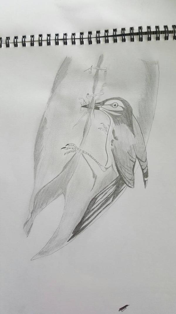 Weaving Bird by Ieberg