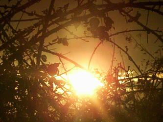 Sunset 2.2 by sugarugly