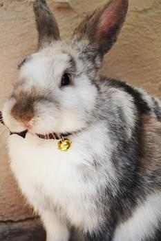 Rabbit's bell
