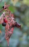 Leaf in october by H-L-J