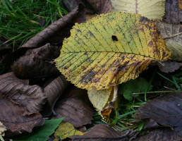 Autumn colors again by H-L-J
