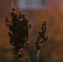 Against sunlight by H-L-J