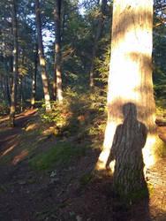 Algonquin Silhouette