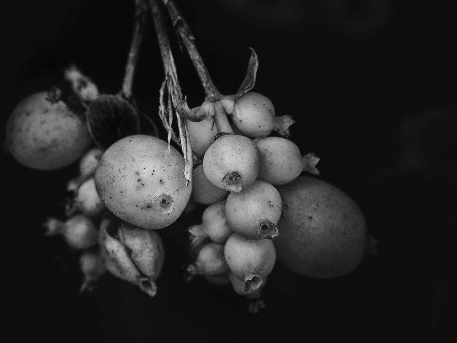 Pastel Black by Serdar-T