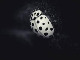 Ladybug by Serdar-T