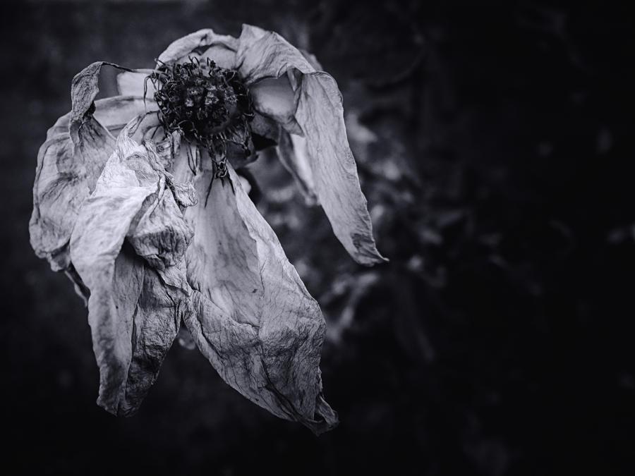 Dying... by Serdar-T