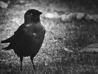Dark Watcher by Serdar-T