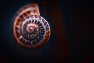 Down in a snail by Serdar-T