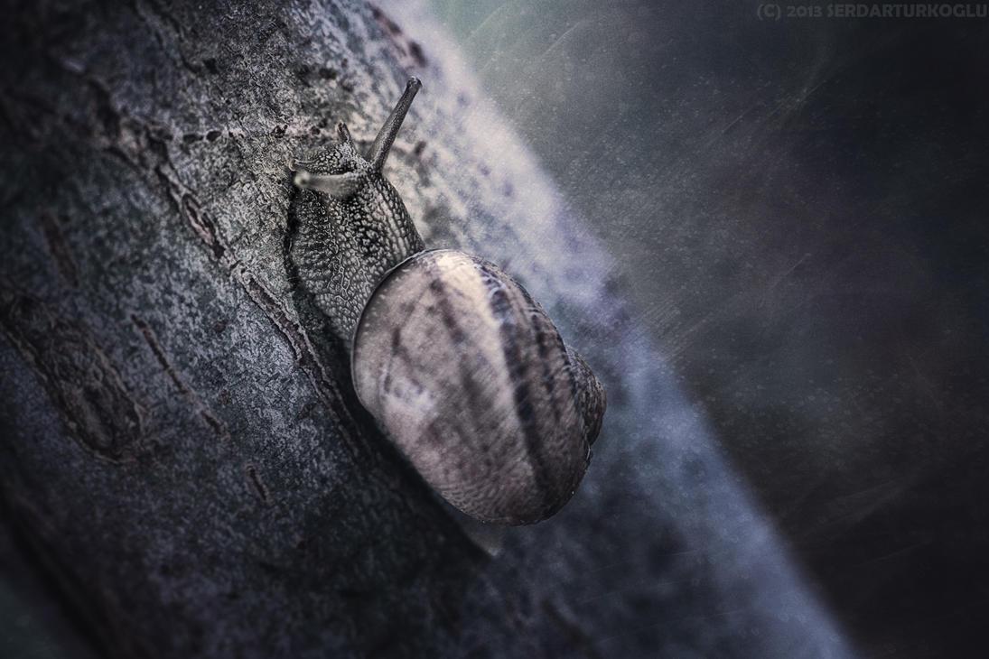 Nightwalker... by Serdar-T