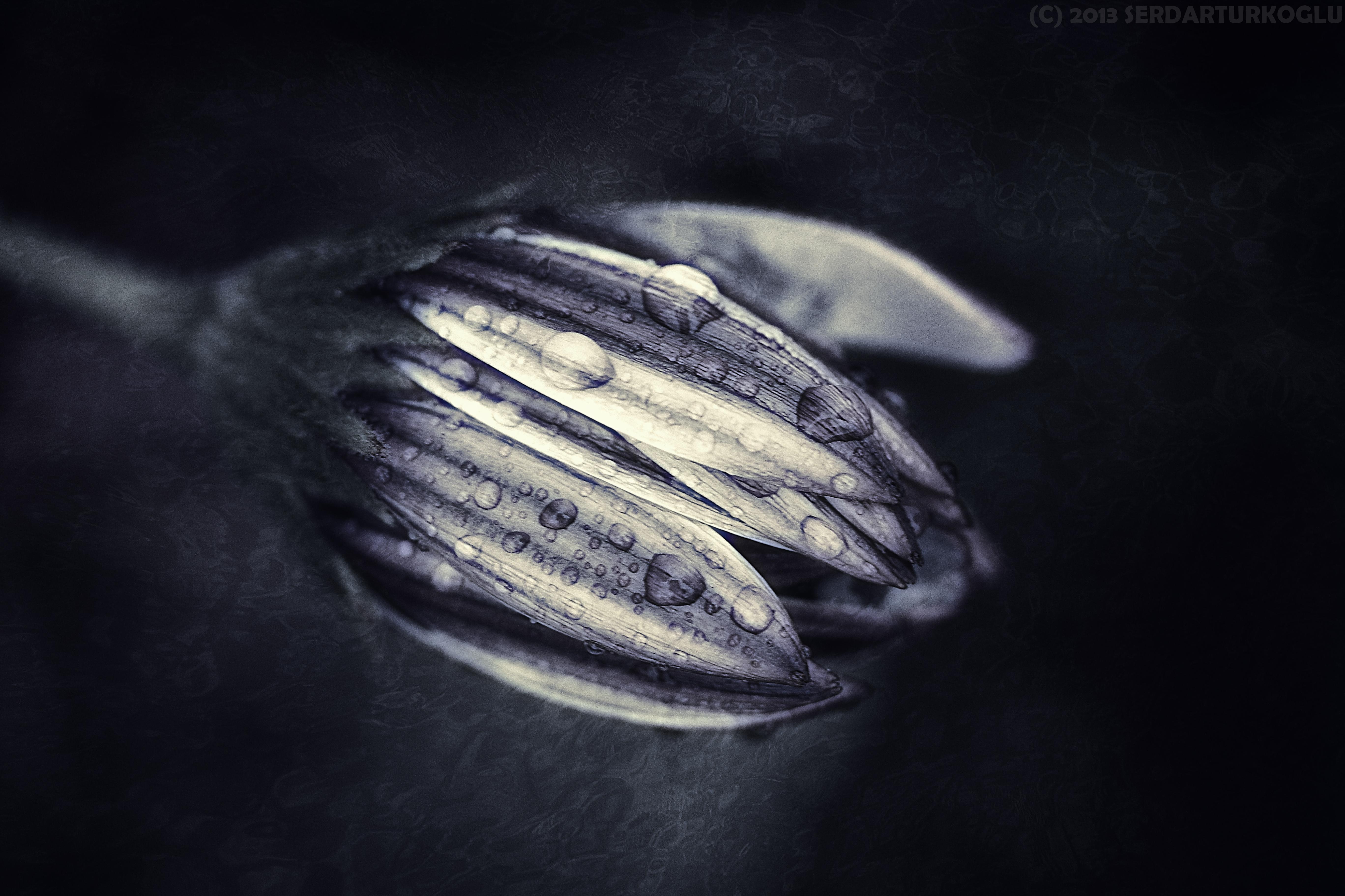 Anonyma by Serdar-T