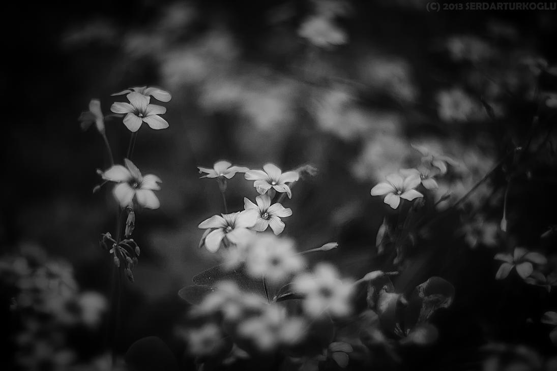 ... by Serdar-T