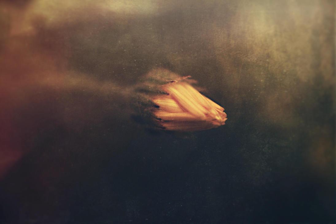 Image by Serdar-T