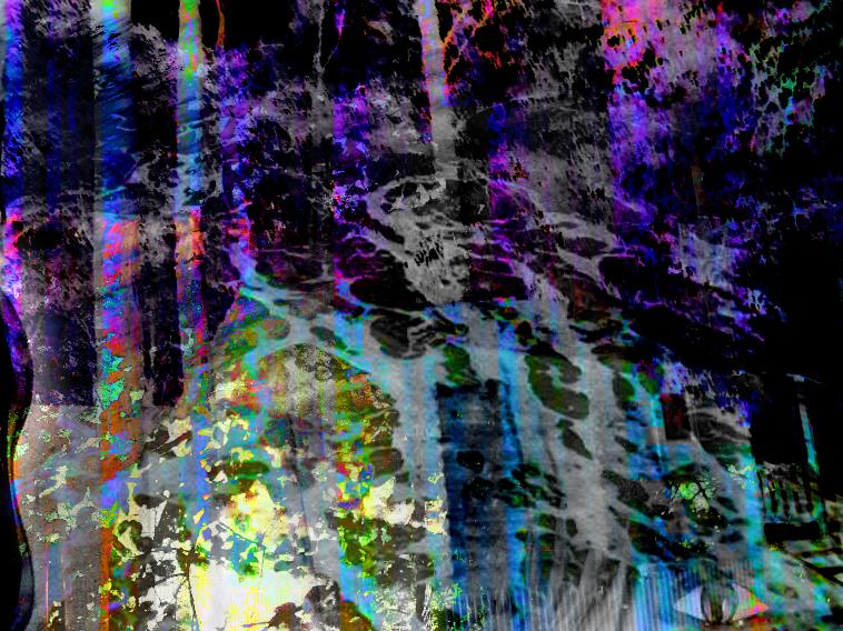 woods by xXvoodoo-angelXx