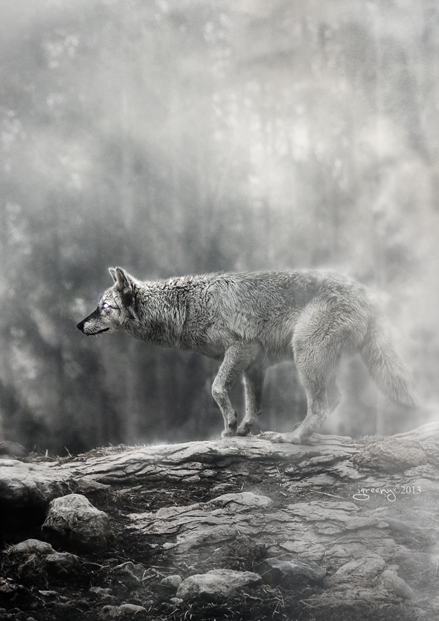 Wolf1 by igreeny