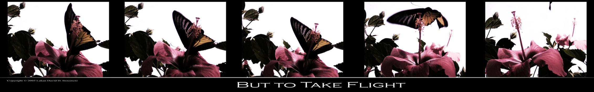 But to Take Flight by lakan-inocencio