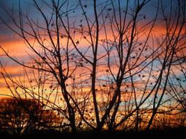 Tree Silhouette by I-am-Britta
