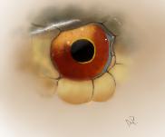 Snake eye by Alisha-town