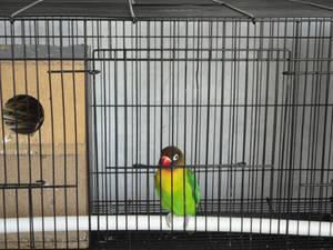 My Lovebird