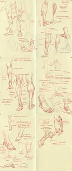 anatomy dump 2