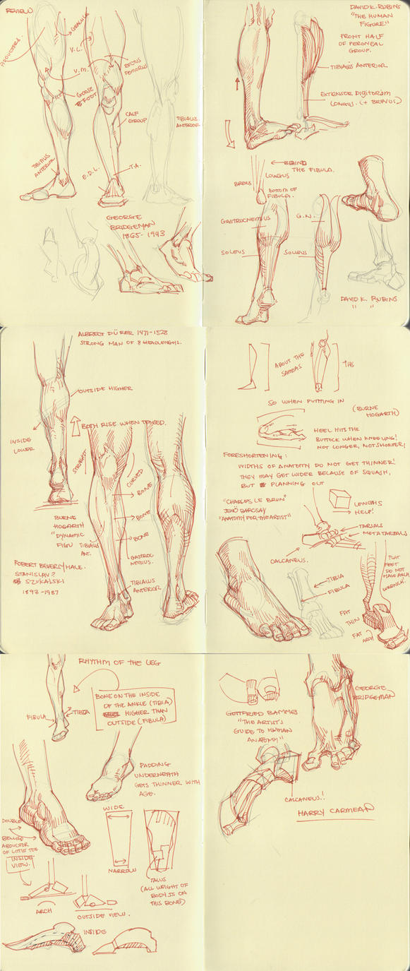 anatomy dump 2 by kakimari