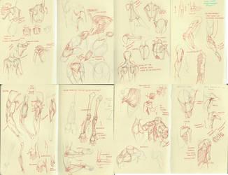 anatomy dump 3