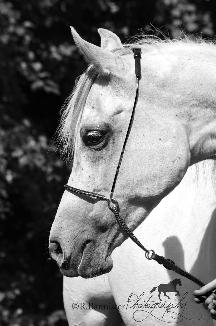 Ficha de Riley. Arabian_mare_by_raythegoth-d3ielc9