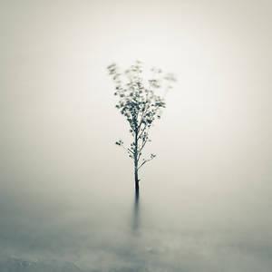 Little tree on water