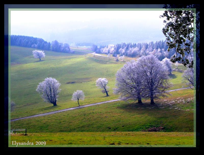 Icy Trees II by Elysandra