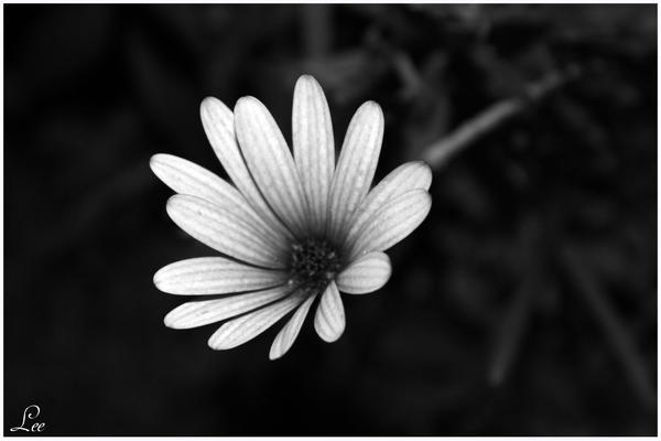 Lonley Flower by LikaTheSheep