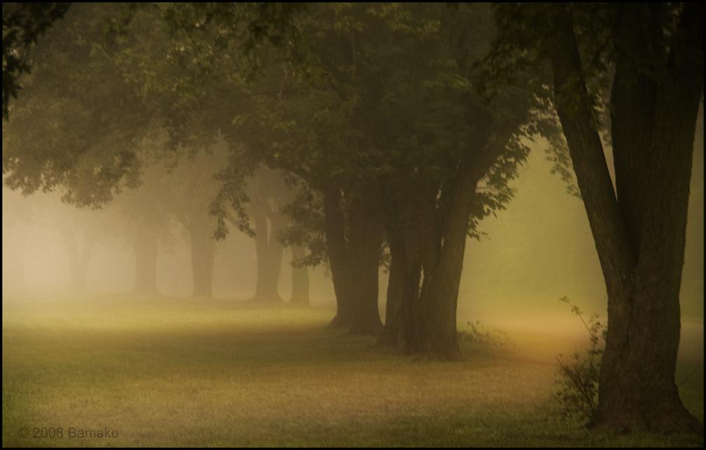 Fog by bamako