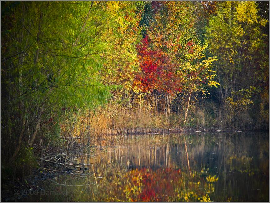 Pond's Edge by bamako