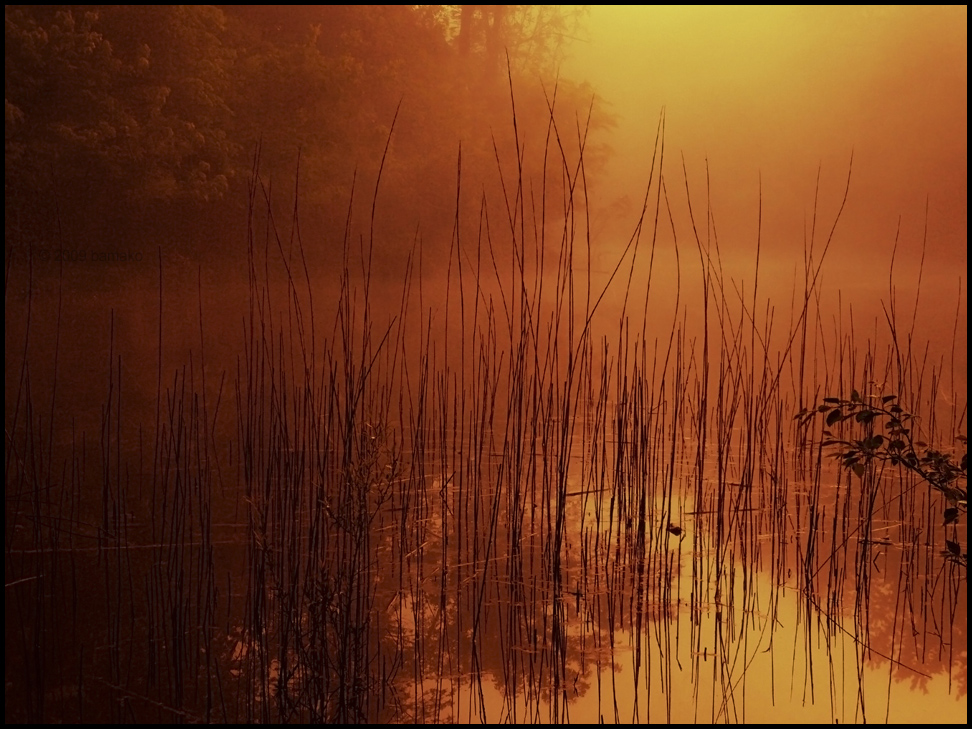 Reeds At Sunrise by bamako