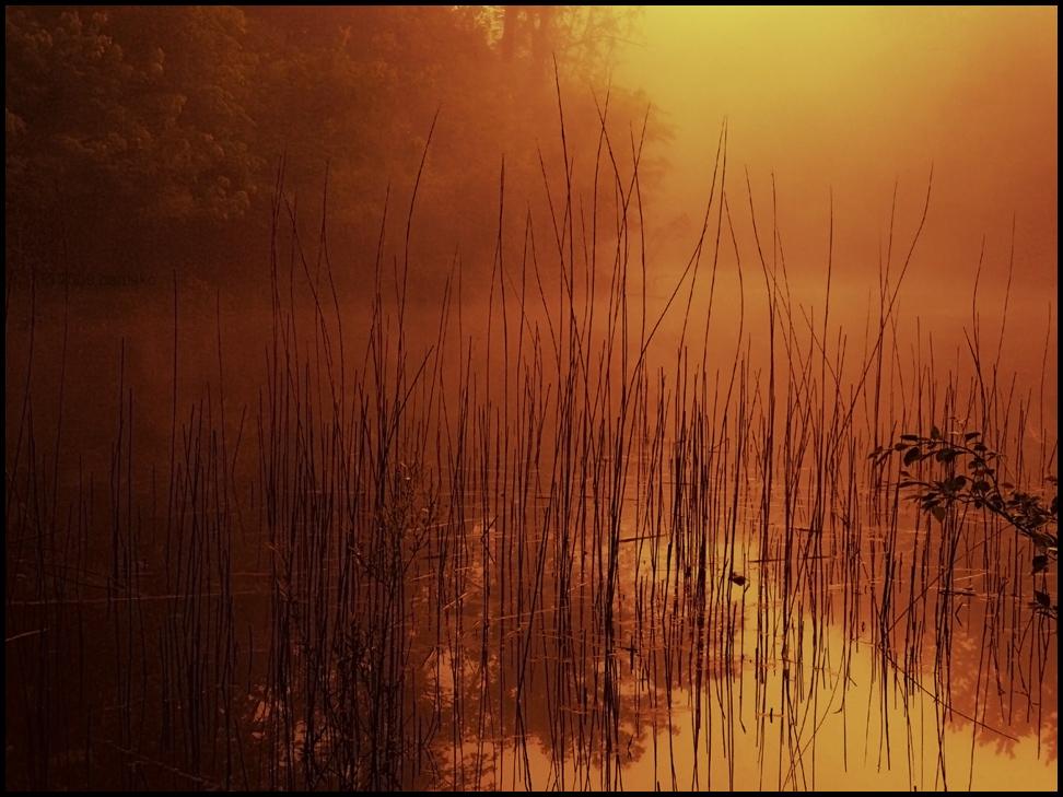 Reeds At Sunrise by bamako