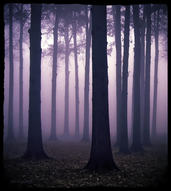 Purple Haze by bamako