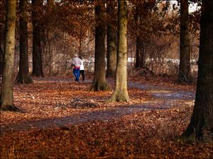 Afternnoon Walk
