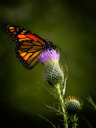 The Monarch