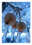 Iced Fruit
