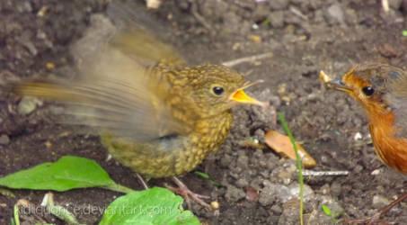 Baby Robin and Hoppy by kidliquorice