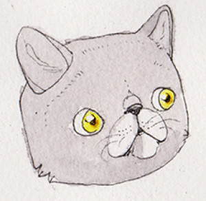chillcats's Profile Picture