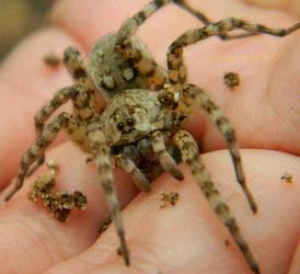 Cuteness Reigns + Video by ArachnoWolf