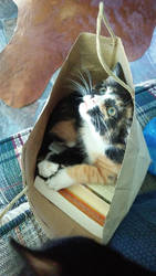 Bag Kitty 2 by ArachnoWolf