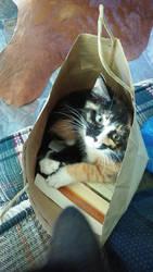 Bag Kitty 1 by ArachnoWolf
