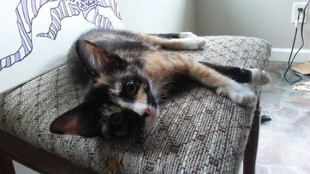 My pretty kitty. by ArachnoWolf