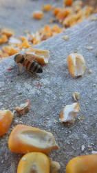 January Bees 6 by ArachnoWolf