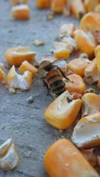 January Bees 5 by ArachnoWolf
