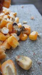 January Bees 4 by ArachnoWolf