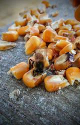 January Bees 3 by ArachnoWolf