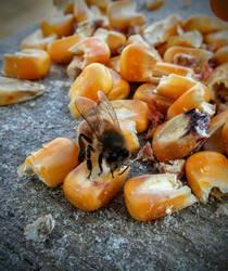 January Bees 2 by ArachnoWolf