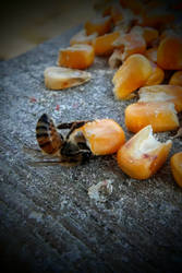 January Bees 1 by ArachnoWolf